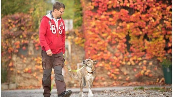 Hundetrainer-Hundeschule-Dresden